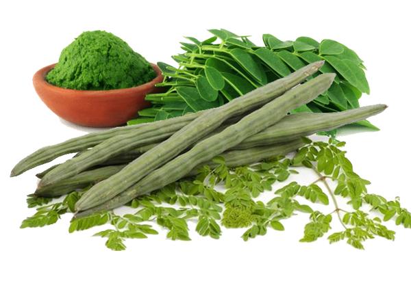 Drumstick Leaves Health Benefits-