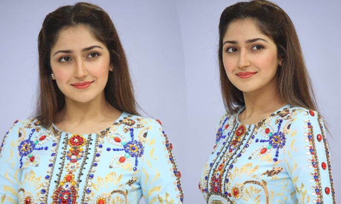Sayesha Saigal Latest Photos--Sayesha Saigal New Stills-