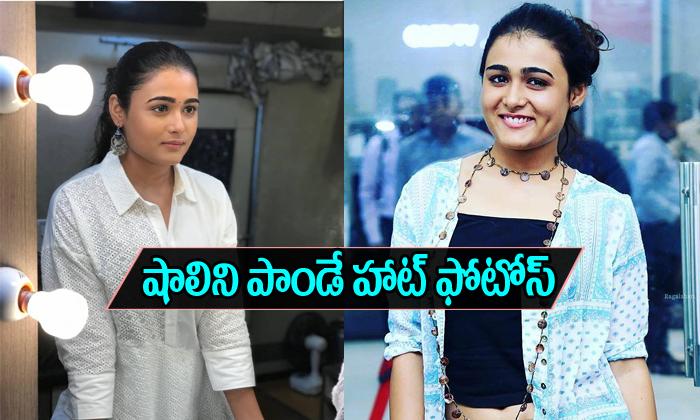 Shalini Pandey Spicy stills-Shalini Pandey Spicy Stills--Telugu Actress Hot Photos Shalini Pandey Spicy Stills--Shalini Pandey Spicy Stills-
