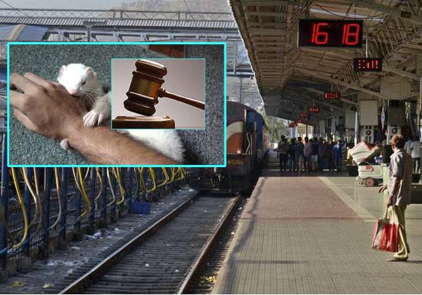 Railways Ordered To Pay Rs 30 000 Compensation Victim Of Rat-bite-