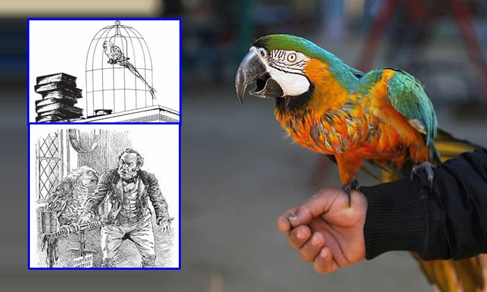 The Parrot Sings And Dances But Died Through Over Education--The Parrot Sings And Dances But Died Through Over Education-