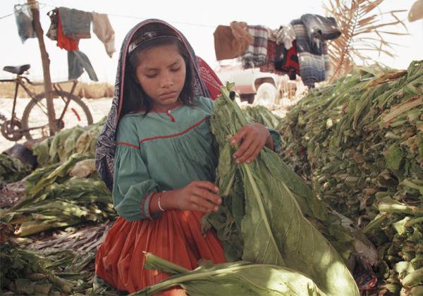 America Survey on Indian Child Labour-America Survey On Indian Child Labour,Indian Child Labour,NRI,telugu NRI Updates