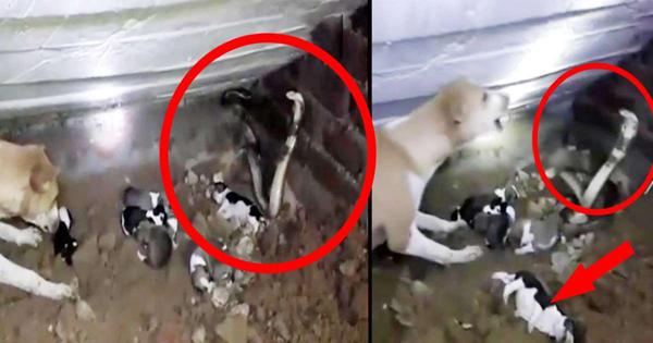 Cobra Attacks Puppies  4 Succumbed To Snakebite In Odisha's Bhadrak-
