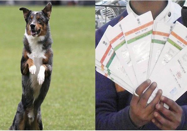 Strange : Ration Rice For Dog In Odia Village Of Madhya Pradesh…-