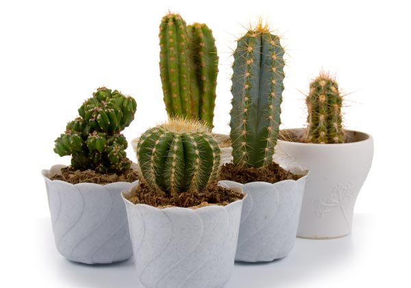 Which Plant Is Useful And Where To Place The In Our Home-