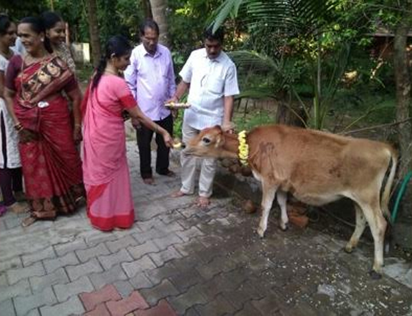 Which Type Of Food Must Be Fed To Cows-