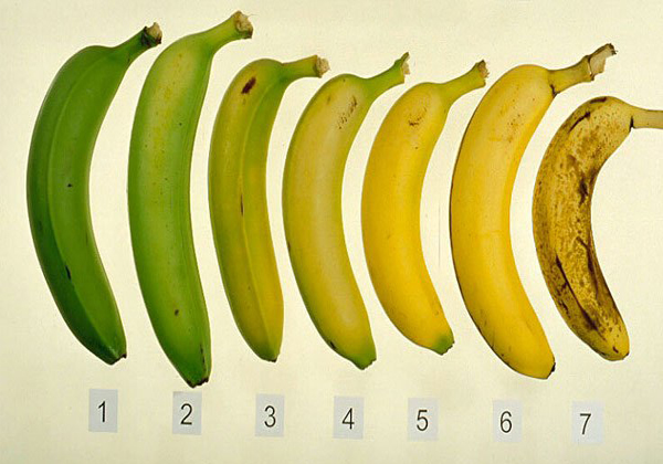 Banana Marchant Give Punch To The Current Officer-