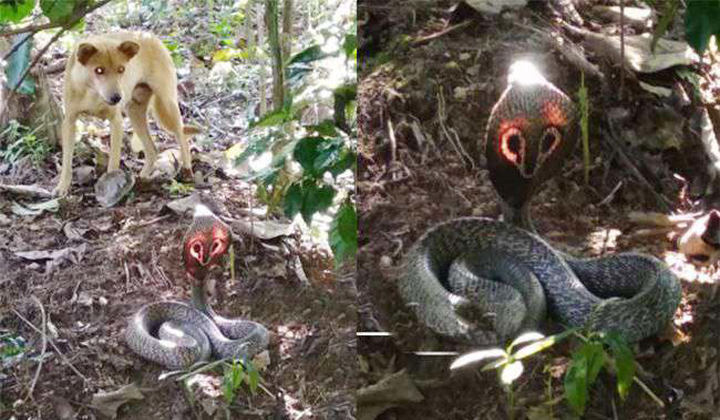 Rare Snake Invented By Dog At Karnataka-
