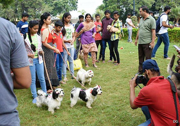Ghmc Started Dogs Park At Kondapur Hyderabad-