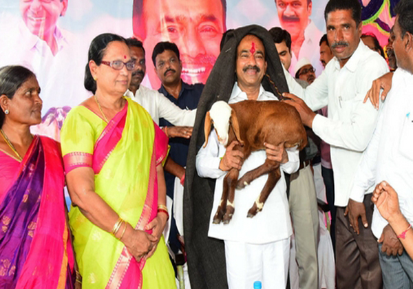 Mla Candidates Are Buyying Sheeps For Coming Dasara-