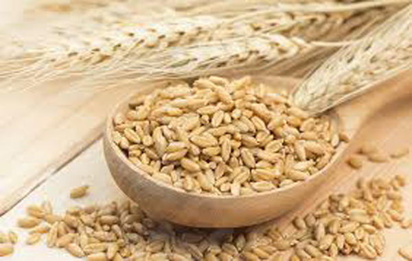 11 Health Benefits Of Barley Water-