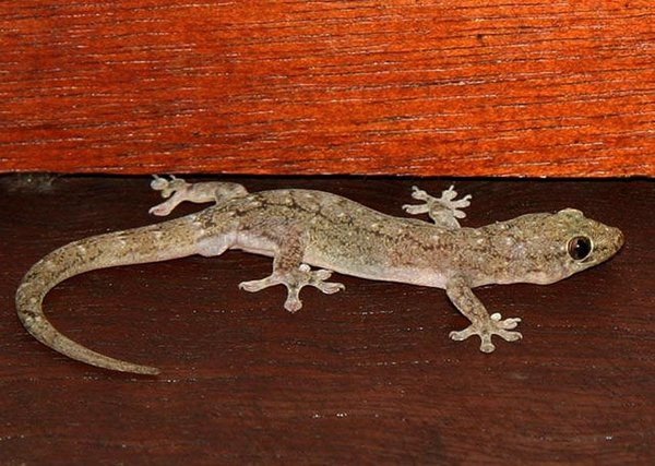 Effects Of Lizard Falling On Body Parts Men And Women-