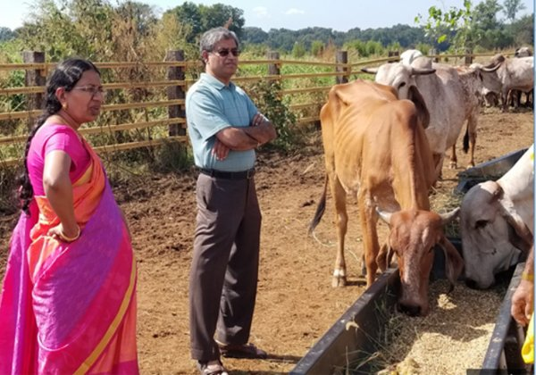Goshala In America For Save The Cows-Hindu Temples NRI Telugu News Updates Peoples