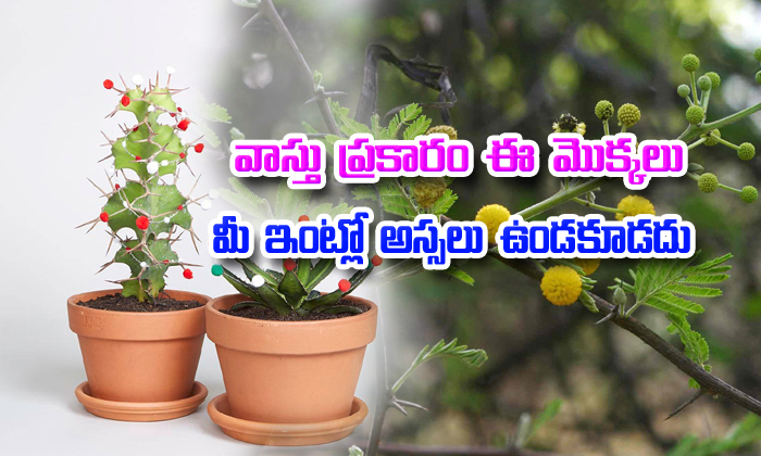 According To Vastu These Plants Should Not Be In Your House--According To Vastu These Plants Should Not Be In Your House-