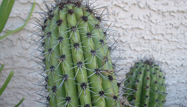 According To Vastu These Plants Should Not Be In Your House-