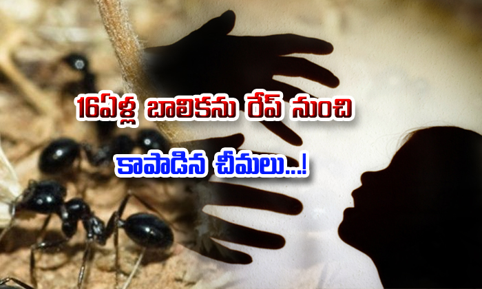 Ants Save 16-year-old From Getting Raped--Ants Save 16-year-old From Getting Raped-