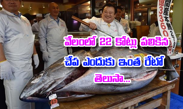 Endangered Tuna Sold For Rs 21 Crore In Japan World\'s Most-prized Fish--Endangered Tuna Sold For Rs 21 Crore In Japan World's Most-prized Fish-