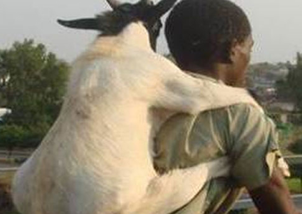 Man Arrested For 'raping Goat' Claims He Asked Permission First-Kennedy Kambani Malawi Raping Goat