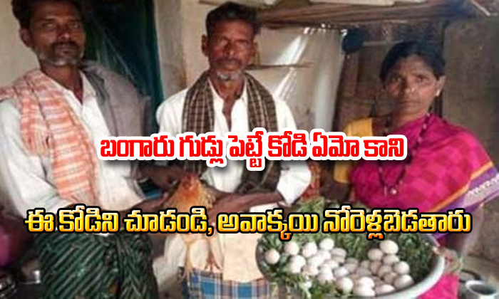 This Hen Gets Guinness Book Of World Record--This Hen Gets Guinness Book Of World Record-
