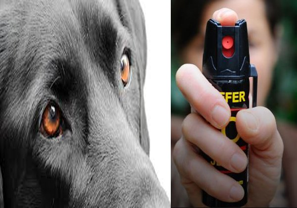 Pepper Spry In Dog Eyes The Owner Of Bruised-