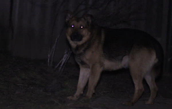Can Dogs Detect Ghosts-Dogs Spirits
