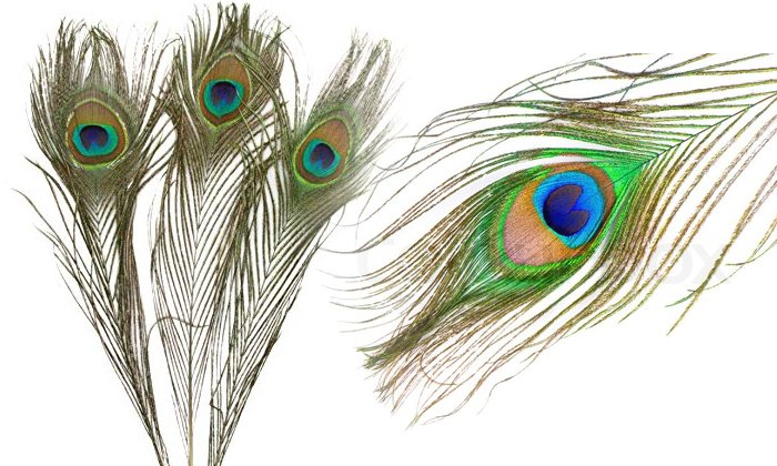 Positive Effects Of Keeping Peacock Feathers At Home--Positive Effects Of Keeping Peacock Feathers At Home-