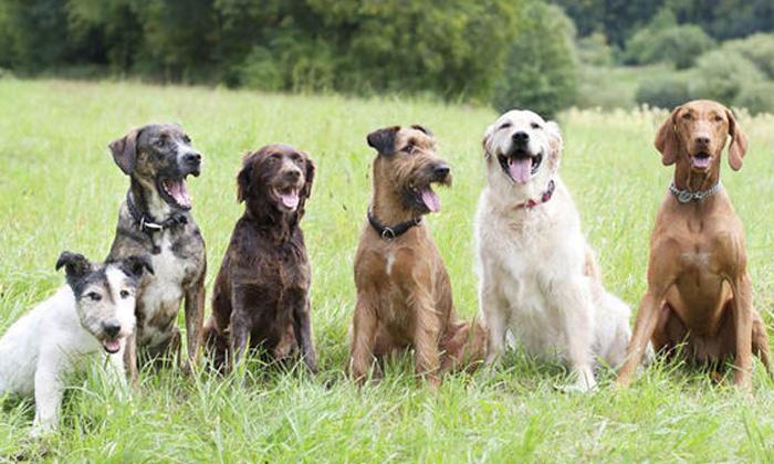3.5 Lakhs Fine For Feeding Street Dogs--3.5 Lakhs Fine For Feeding Street Dogs-