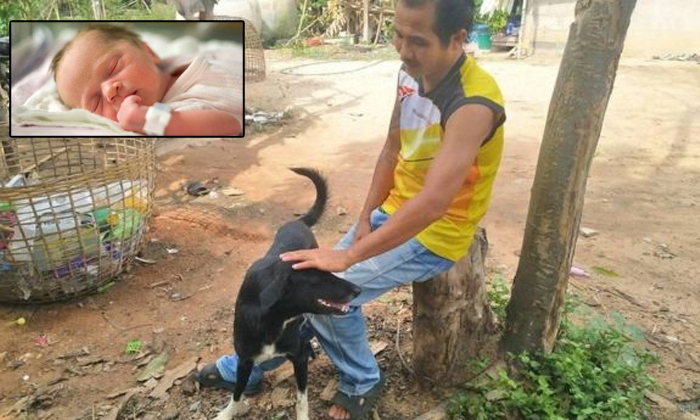 Dog Saves Baby Buried A In A Thailand Field--Dog Saves Baby Buried Alive In A Thailand Field-