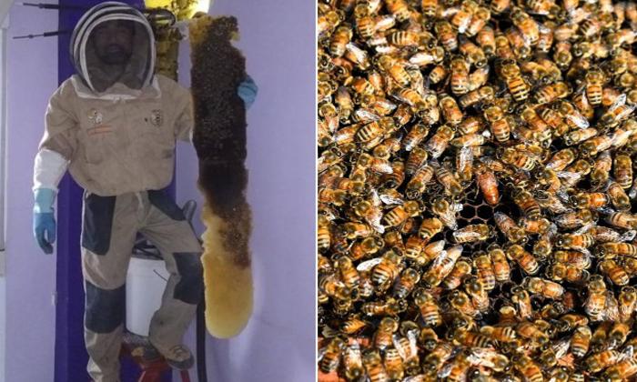 గోడ లోపల తేనేతుట్టు….వైరల్ అవుతున్న వీడియో-Honey Bees In Side The Wall Video Goes Viral-