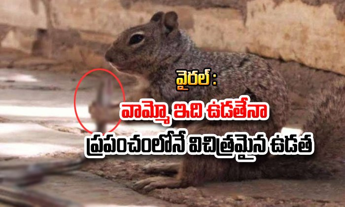 Viral Pic Of Squirrel Biting Snake Goes Viral In Social Media--Viral Pic Of Squirrel Biting Snake Goes In Social Media-