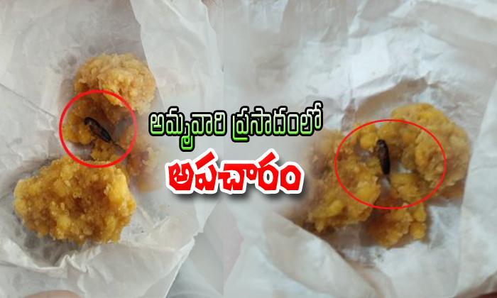 Insect Found In Basara Ammavaari Laddu Prasadam--Insect Found In Basara Ammavaari Laddu Prasadam-