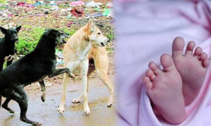 Street Dogs Terminate Three Months Old Baby--Street Dogs Terminate Three Months Old Baby-