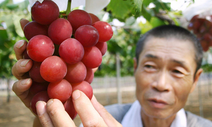 A Bunch Of 24 Grapes Sold For $11,000 In Japan.--A Bunch Of 24 Grapes Sold For $11 000 In Japan.-