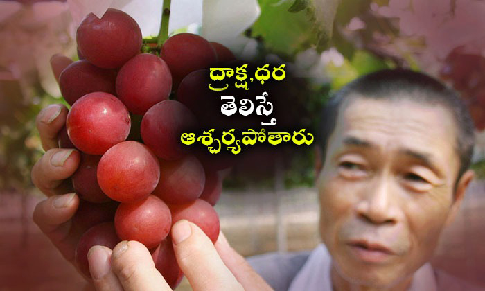A Bunch Of 24 Grapes Sold For ,000 In Japan.--A Bunch Of 24 Grapes Sold For 000 In Japan.-