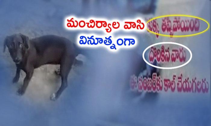Dog Missing Flexi In Manchiryala--Dog Missing Flexi In Manchiryala-
