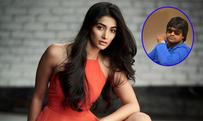 Pooja Hegde In Harish Shanker Valmiki Movie--Pooja Hegde In Harish Shanker Valmiki Movie-