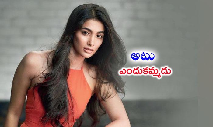 Pooja Hegde Steps In Bollywood--Pooja Hegde Steps In Bollywood-