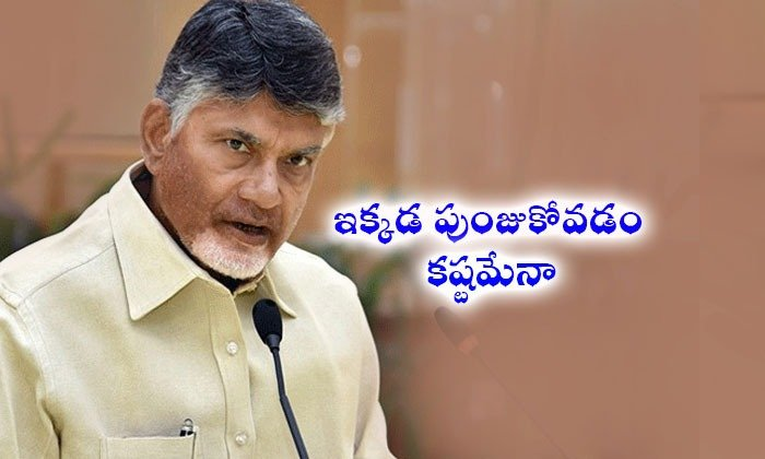 Tdp Back In Rayalaseema--TDP Back In Rayalaseema-