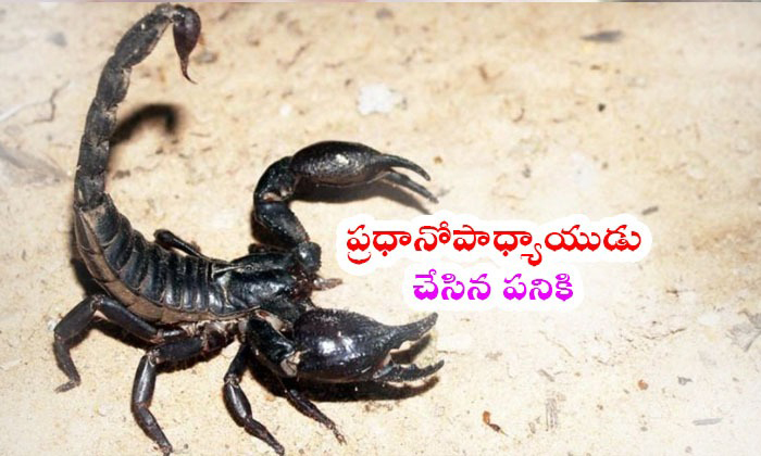 A Boy Fro Up Forced To Sweep School Gets Stung By Scorpion.--A Boy Fro UP Forced To Sweep School Gets Stung By Scorpion.-