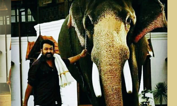 Forest Department Files Charge Sheet Filed Against Mohanlal-kannada Superstar Mohanlal,mohanlal-Forest Department Files Charge Sheet Filed Against Mohanlal-Kannada Superstar Mohanlal