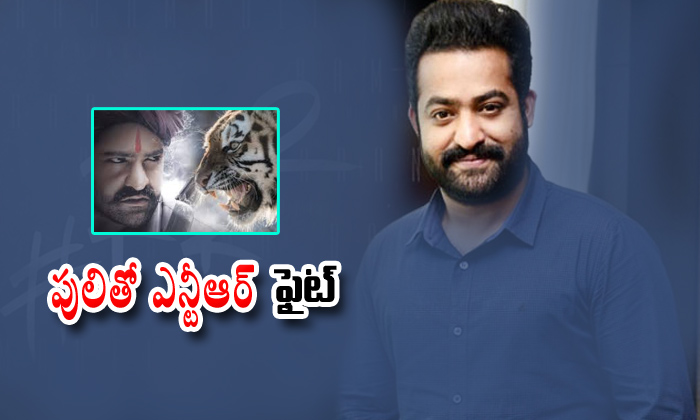 Juniour Ntr Fight With Tiger-jakkana Rajamouli,juniour Ntr,ramcharan Ntr,rrr-Juniour NTR Fight With Tiger-Jakkana Rajamouli Juniour Ntr Ramcharan Rrr