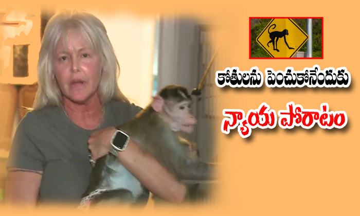 Missouri Woman In Legal Battle To Keep Three Monkeys-missouri,nri,telugu Nri News Updates-Missouri Woman In Legal Battle To Keep Three Monkeys-Missouri Nri Telugu Nri News Updates