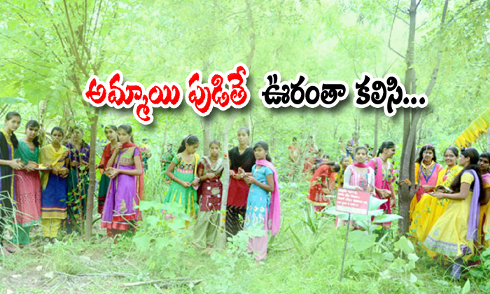 Village In Rajasthan Plants 111 Trees For Every Girl Child Born Is Great Thing-mango Trees And Other Plants,village In Rajasthan-Village In Rajasthan Plants 111 Trees For Every Girl Child Born Is Great Thing-Mango And Other