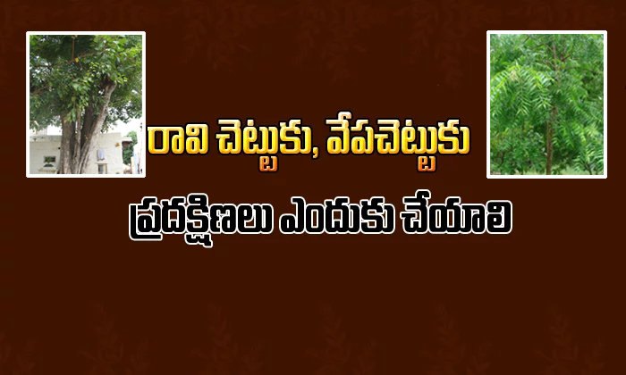 Why Do We See Neem And Peepal Tree In Temples- Telugu Devotional Bhakthi(తెలుగు భక్తి ) Why Do We See Neem And Peepal Tree In Temples--Why Do We See Neem And Peepal Tree In Temples-