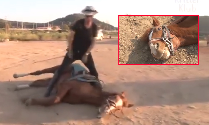 This Horse Not Want Do Work When Try To Ride He Acted As Dead-horse Not Want Do Work When Try To Ride,lazy,telugu Viral News Updates,viral In Social Media-This Horse Not Want Do Work When Try To Ride He Acted As Dead-Horse Lazy Telugu Viral News Updates In Social Media