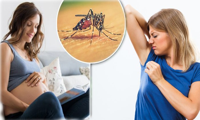 Pregnancy Woman And That Blood Group More Attractive To Mosquitoes-mosquitoes,o +ve Blood Group Nature,pregnancy Woman,telugu Health Tips,viral In Social Media-Pregnancy Woman And That Blood Group More Attractive To Mosquitoes-Mosquitoes O +ve Nature Pregnancy Telugu Health Tips Viral In Social Media
