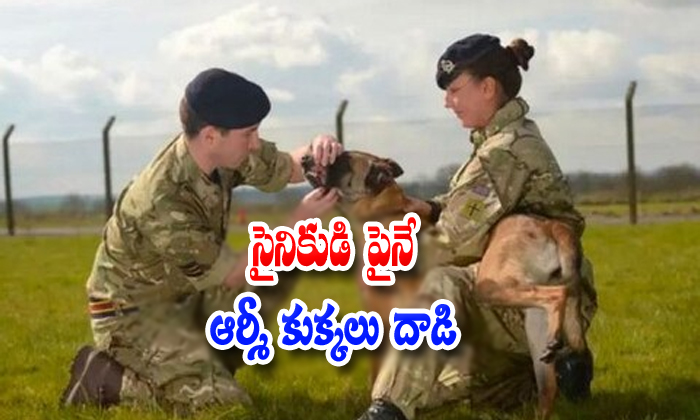 Army Dogs Killed Army Solider-army Officer Give The Food To Dogs,telugu General News,trained Army Dogs Telugu Viral News Army Dogs Killed Solider-army Officer Give The Food To Telugu General News Trai-Army Dogs Killed Solider-Army Officer Give The Food To Telugu General News Trained