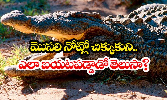 Man S Himself Form Crocodile Mouth-crocodile,death,man,weird News Telugu Viral News Man S Himself Form Crocodile Mouth-crocodile Death Man Weird News-Man Frees Himself Form Crocodile Mouth-Crocodile Death Man Weird News