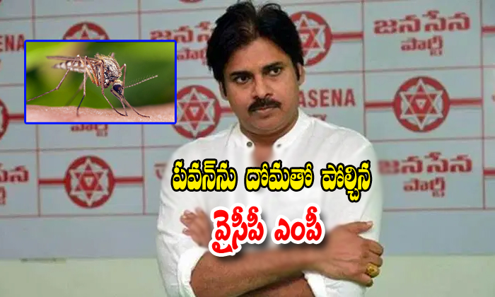 Ysrcp Mp Vijayasaireddi Compared Pavan To Mosquito- Telugu Political Breaking News - Andhra Pradesh,Telangana Partys Coverage Ysrcp Mp Vijayasaireddi Compared Pavan To Mosquito--Ysrcp Mp Vijayasaireddi Compared Pavan To Mosquito-