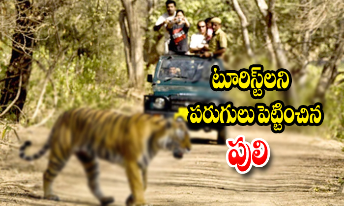 Tiger Chases A Tourist Vehicle-tiger Chases,tourist Vehicle Telugu Viral News Tiger Chases A Tourist Vehicle-tiger Tourist Vehicle-Tiger Chases A Tourist Vehicle-Tiger Vehicle
